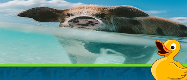 Top 4 ways to stop being a water PIG!
